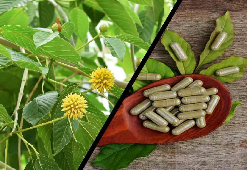 green vein bali kratom dosage