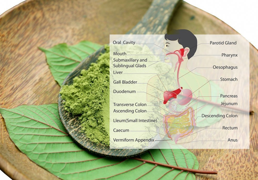 Kratom Bloating & Digestion System