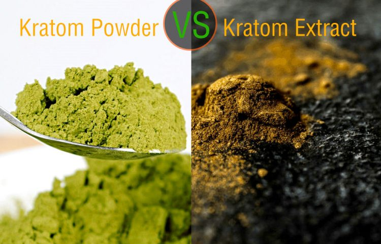 Kratom Powder Vs. Extract; Which One to Opt for?