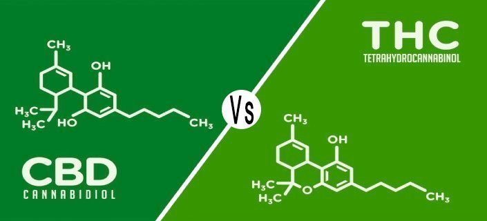 CBD Vs THC Review